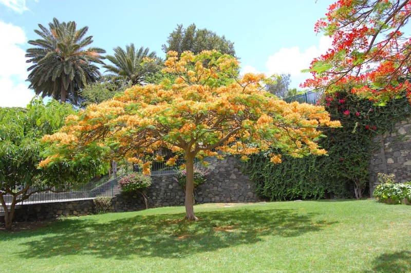 Doramas Park in Las Palmas
