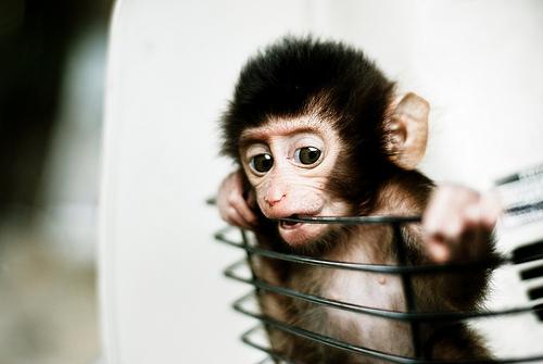 Babyaffe foto mohd khomaini binmohd sidik flickr