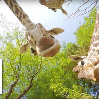 video_koelner_zoo
